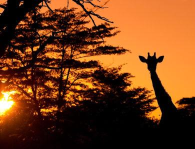 Partir en expédition dans les meilleures destinations de safari